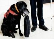 Akadálymentesítés látás- és hallássérültek részére